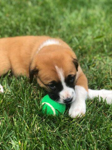 Un cane per regalo di compleanno