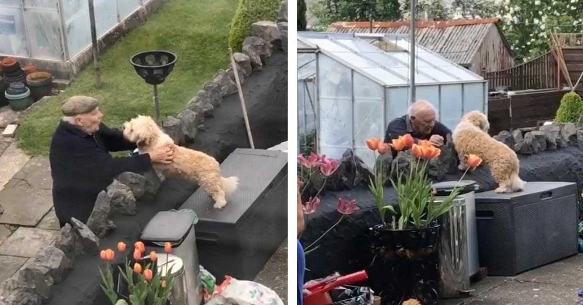 Cane scappa dal vicino