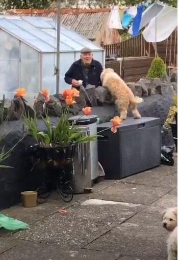 Cane salta la recinzione