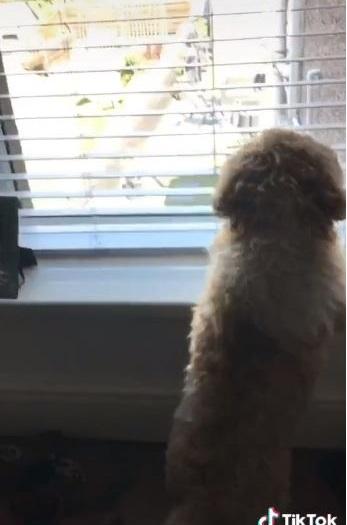 Cane alla finestra