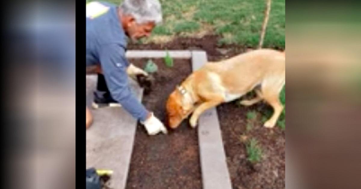 Cane scava buche in giardino