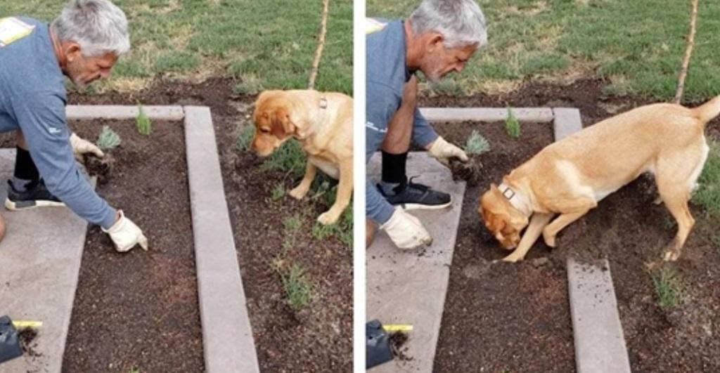 Giardinaggio con il cane
