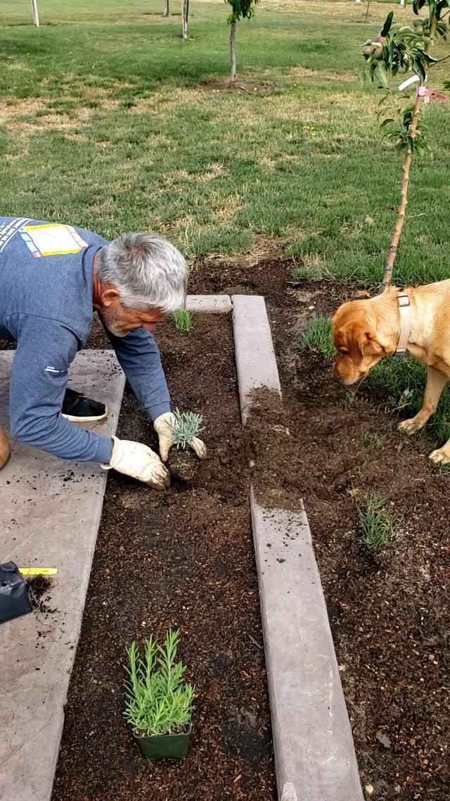 Georgia fa giardinaggio