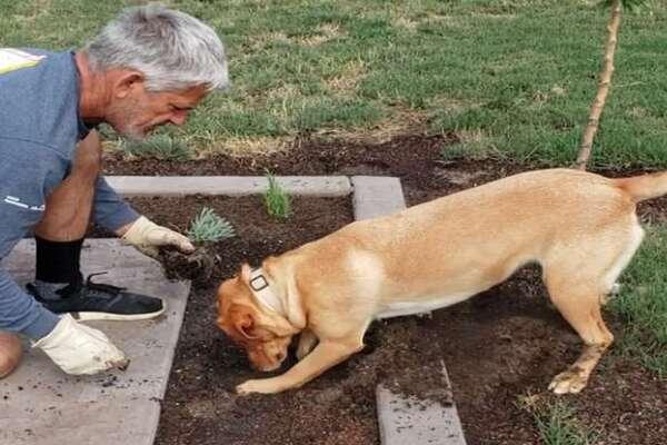 Cane fa giardinaggio