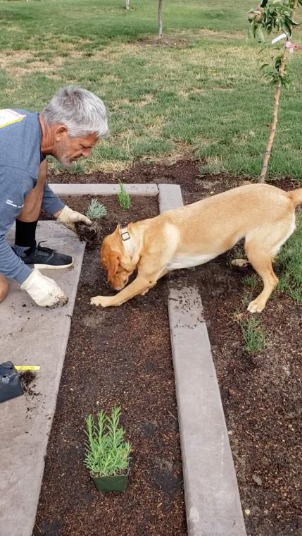 Cane e proprietario in giardino