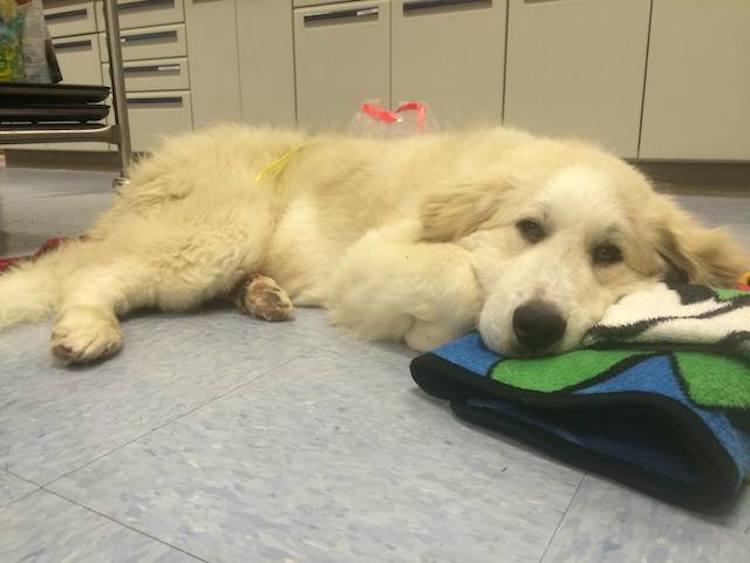 Casper dal veterinario