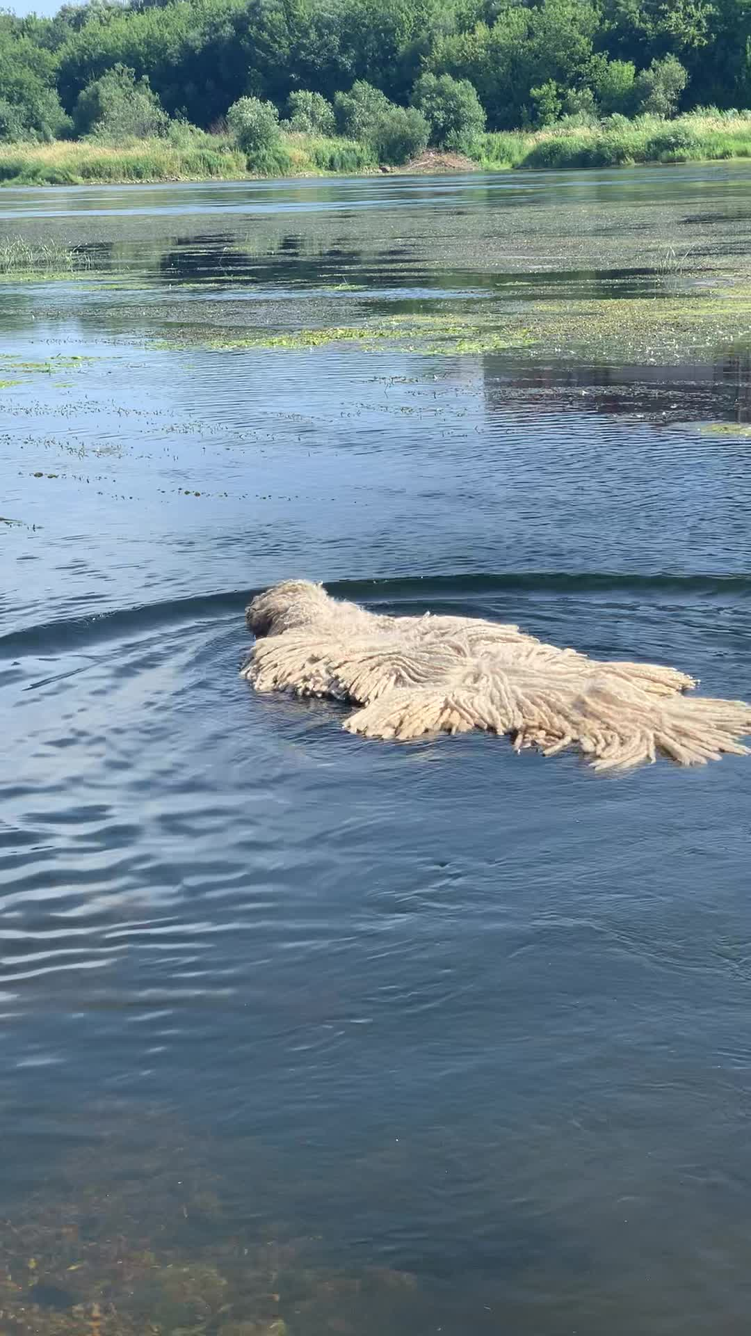 Tappeto nel lago: c'è un cane