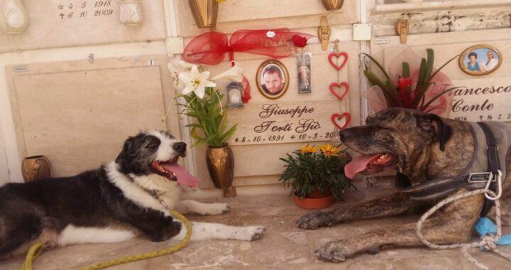 Cani piangono sulla tomba del proprietario morto