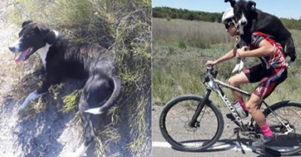 ciclista salva cane abbandonato