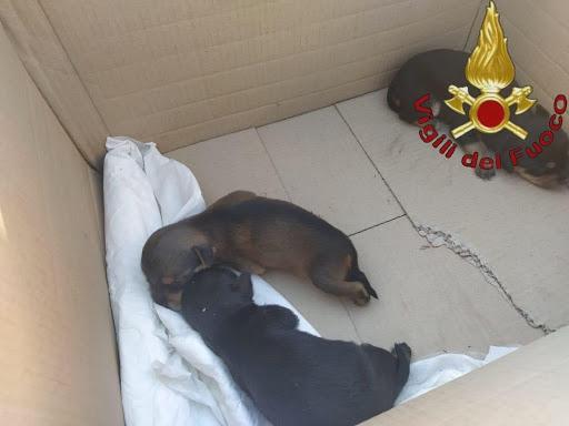 Roma, salvati cuccioli in un cassonetto