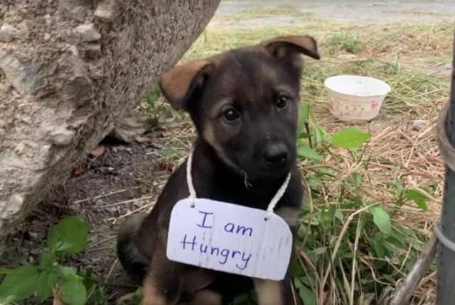 Il cucciolo con il cartello al collo