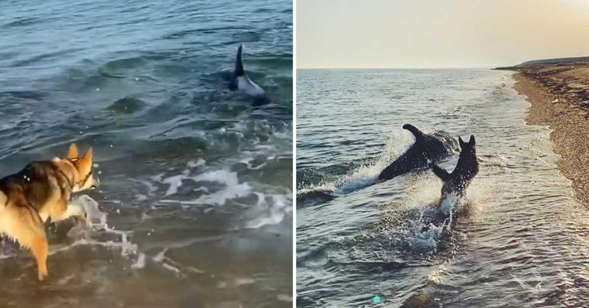 Cucciolo e delfino giocano insieme