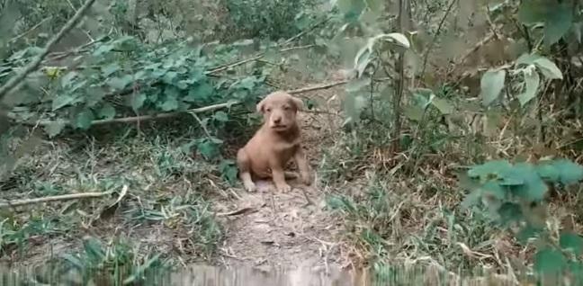 Cucciolo di cane abbandonato