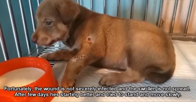 Cucciolo in via di guarigione