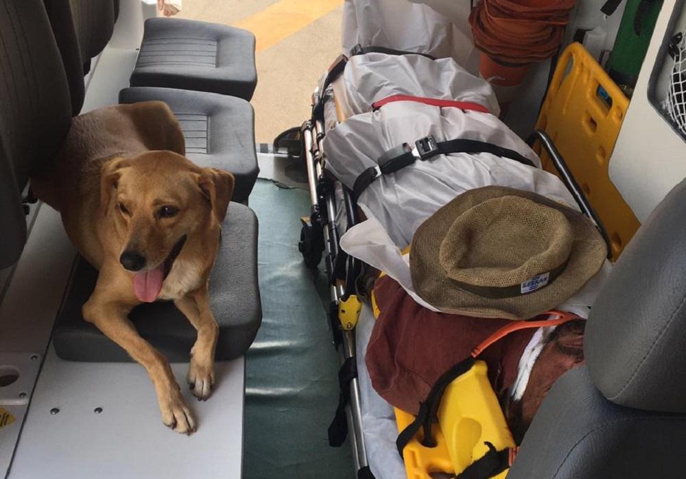 Il trasporto del paziente e del cane