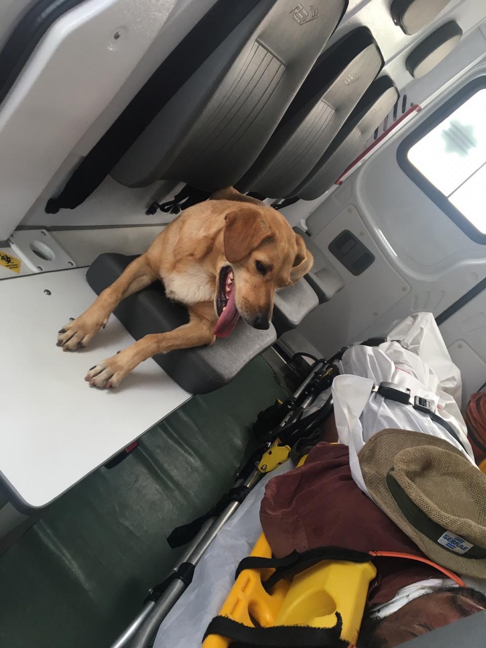 Cane accanto alla barella del proprietario