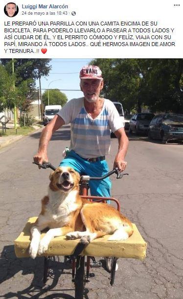 Cane in bici con il proprietario