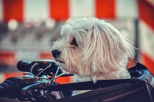 Cucciolo di cane in bici