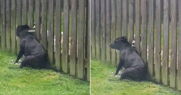 Cucciolo massaggia il cane