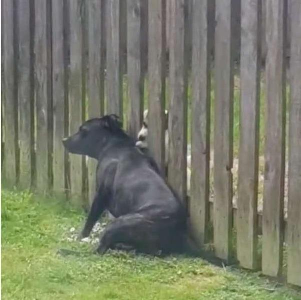 I cani migliori amici al recinto