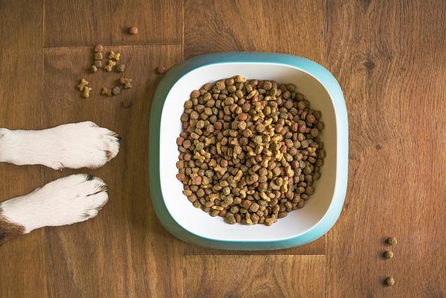 Ciotola di cibo per cani