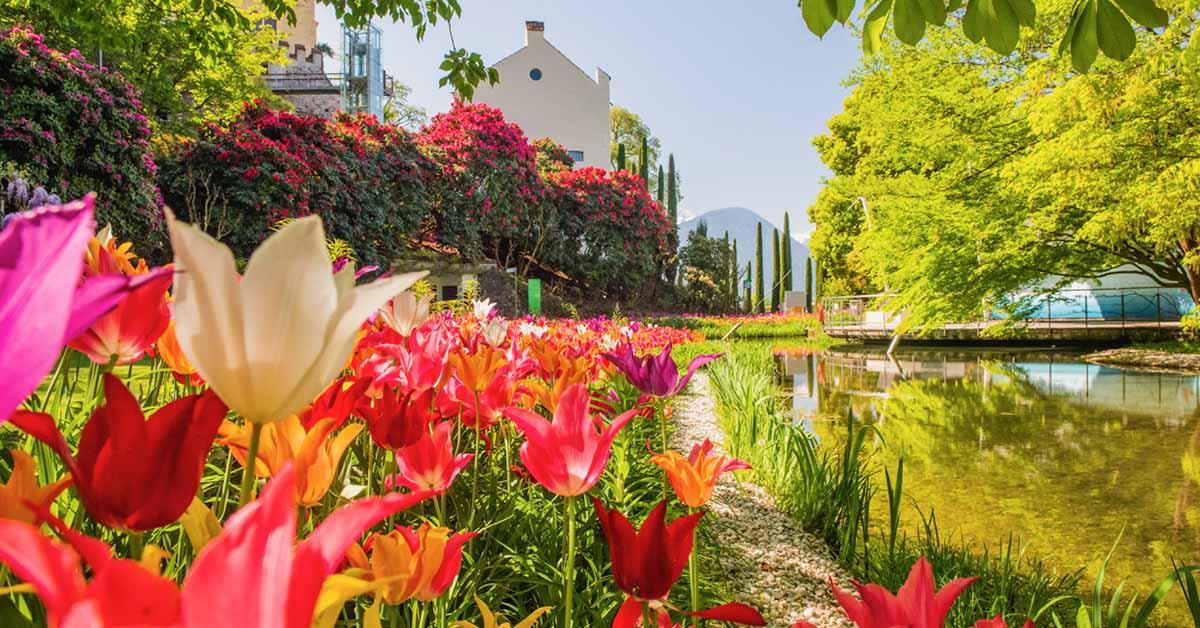 I fiori, le piante e il verde di Merano