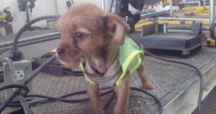 elettricisti adottano cucciolo