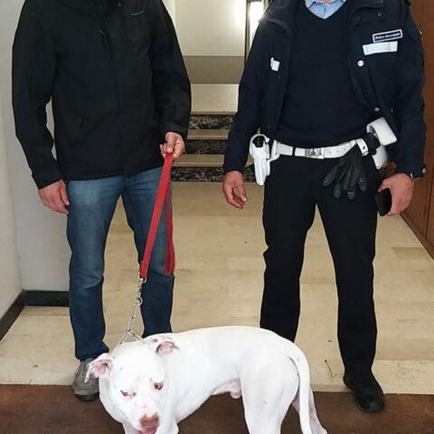 Cane preso a calci a Faenza