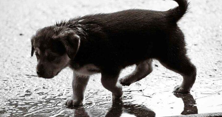 Cane randagio sotto la pioggia