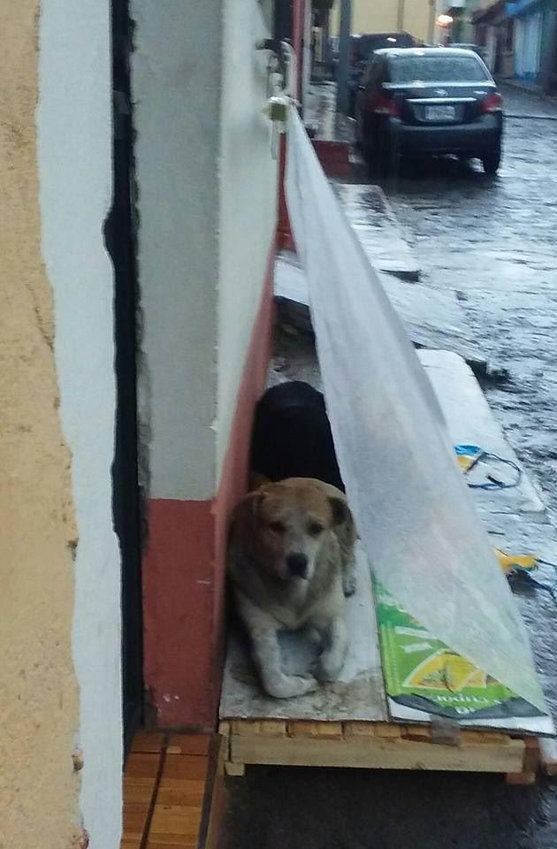 Cibo e acqua per i cani randagi