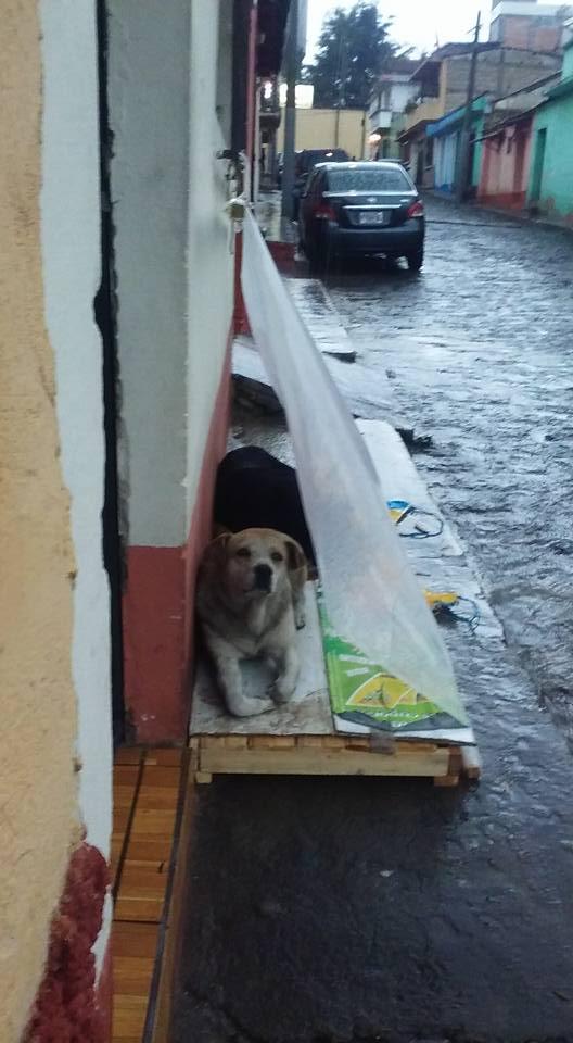 Cani al riparo dalla pioggia