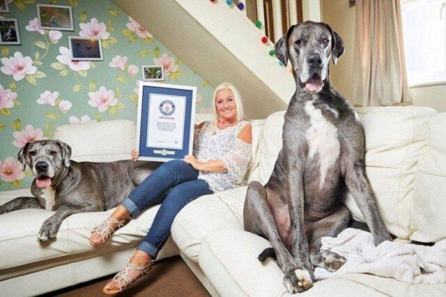 Freddy e il record di cane più alto del mondo