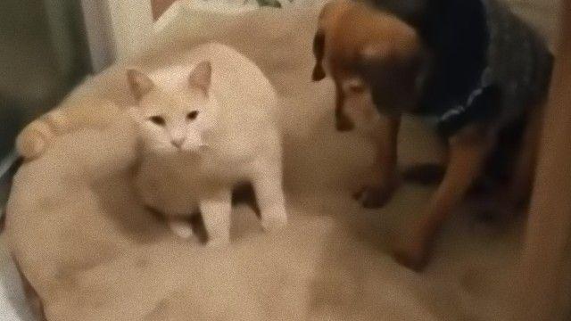 Cane confortato dal gatto
