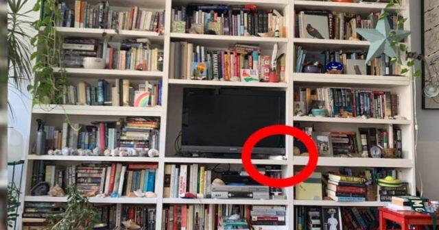 Trova il gatto nascosto