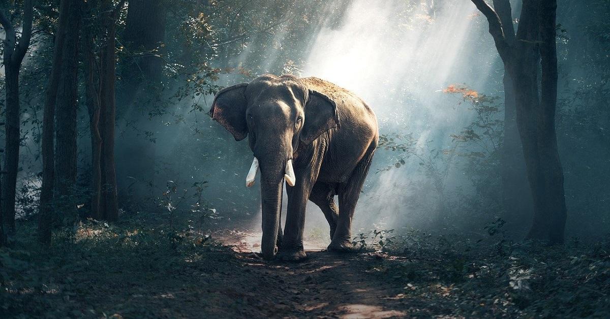 elefante nella natura