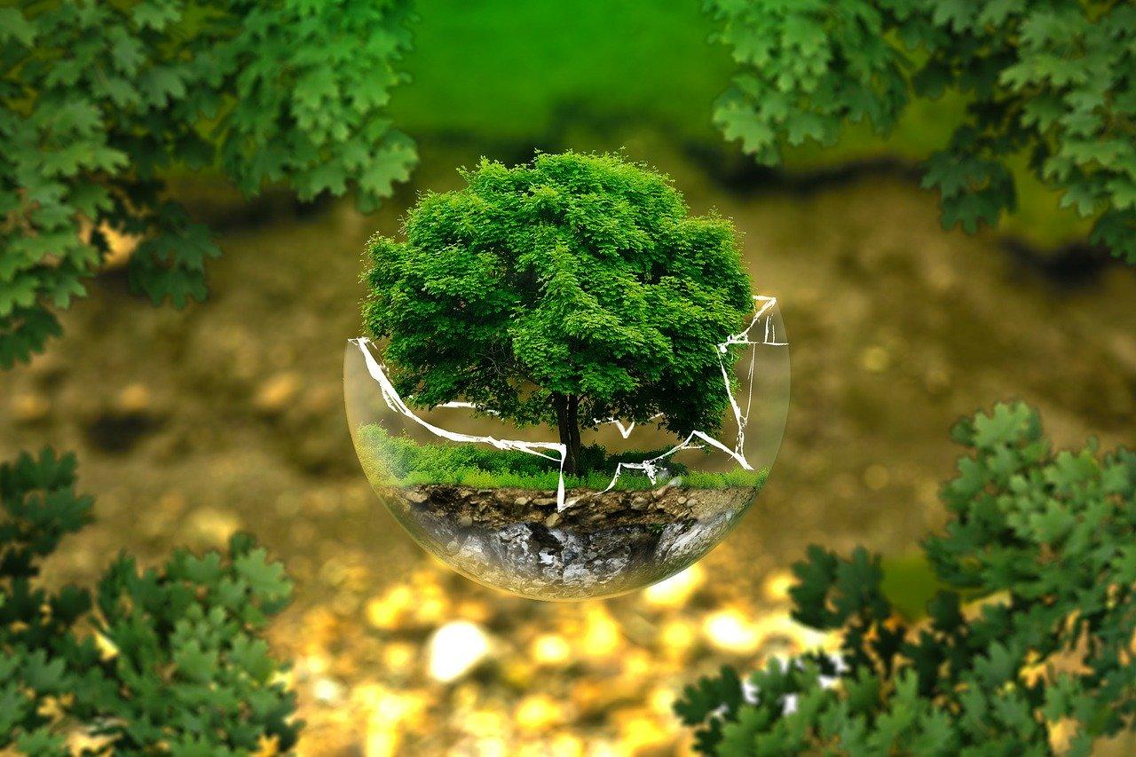 albero in un bicchiere