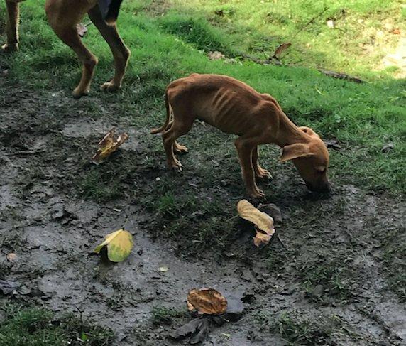 Cani randagi nella terra