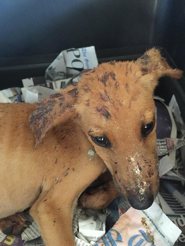 Cane sporco e malato