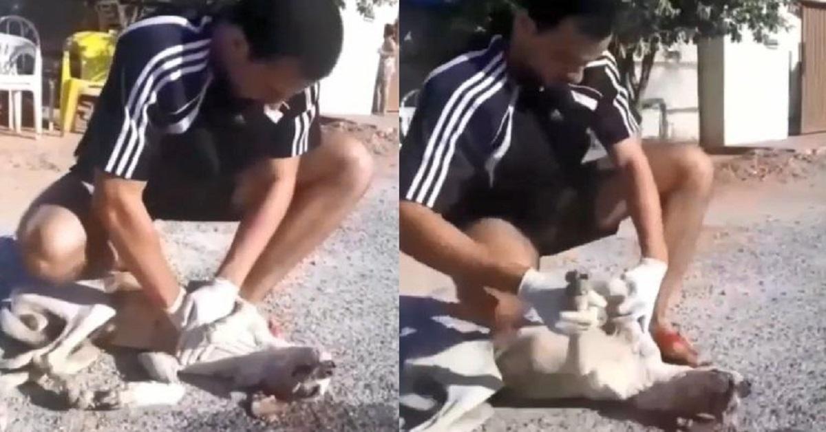 Giovane salva un cane