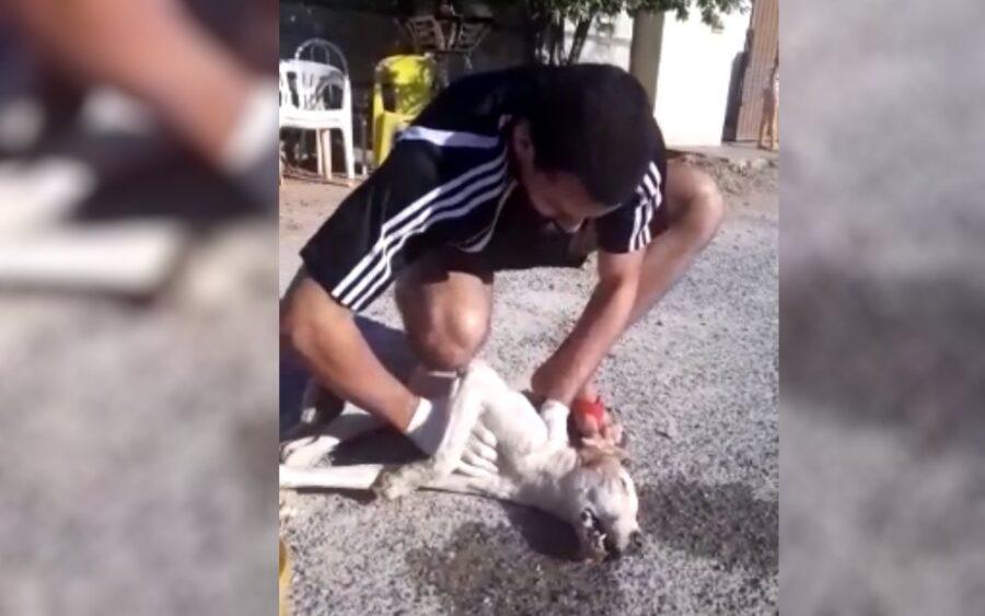 Cane rianimato dal ragazzo