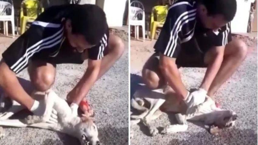 Lucas Ferreira Martins salva il cane