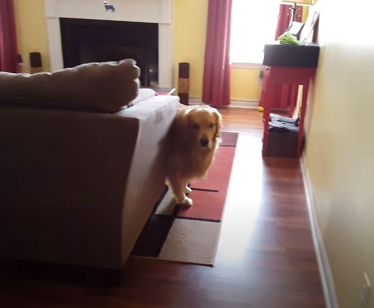 Oshie aspetta la mamma