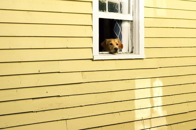 Cane sbircia dalla finestra