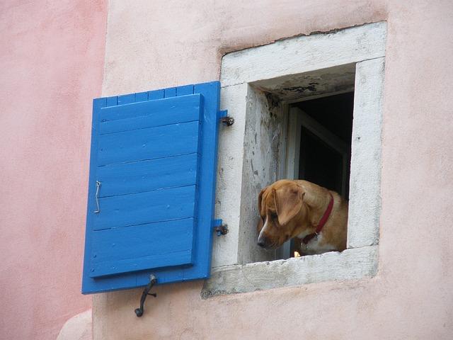 Cane in pericolo alla finestra