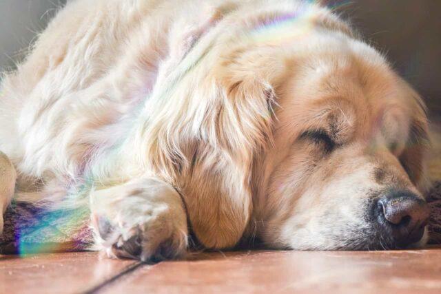 I cani e il sogno
