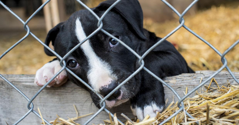 il cane con il suore sul petto è stato adottato
