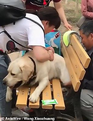 Lato B del cane incastrato nella panchina