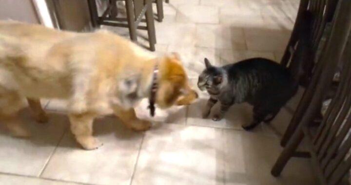 Il legame tra Coco il cane e Jasper il gatto: la clip è diventata virale