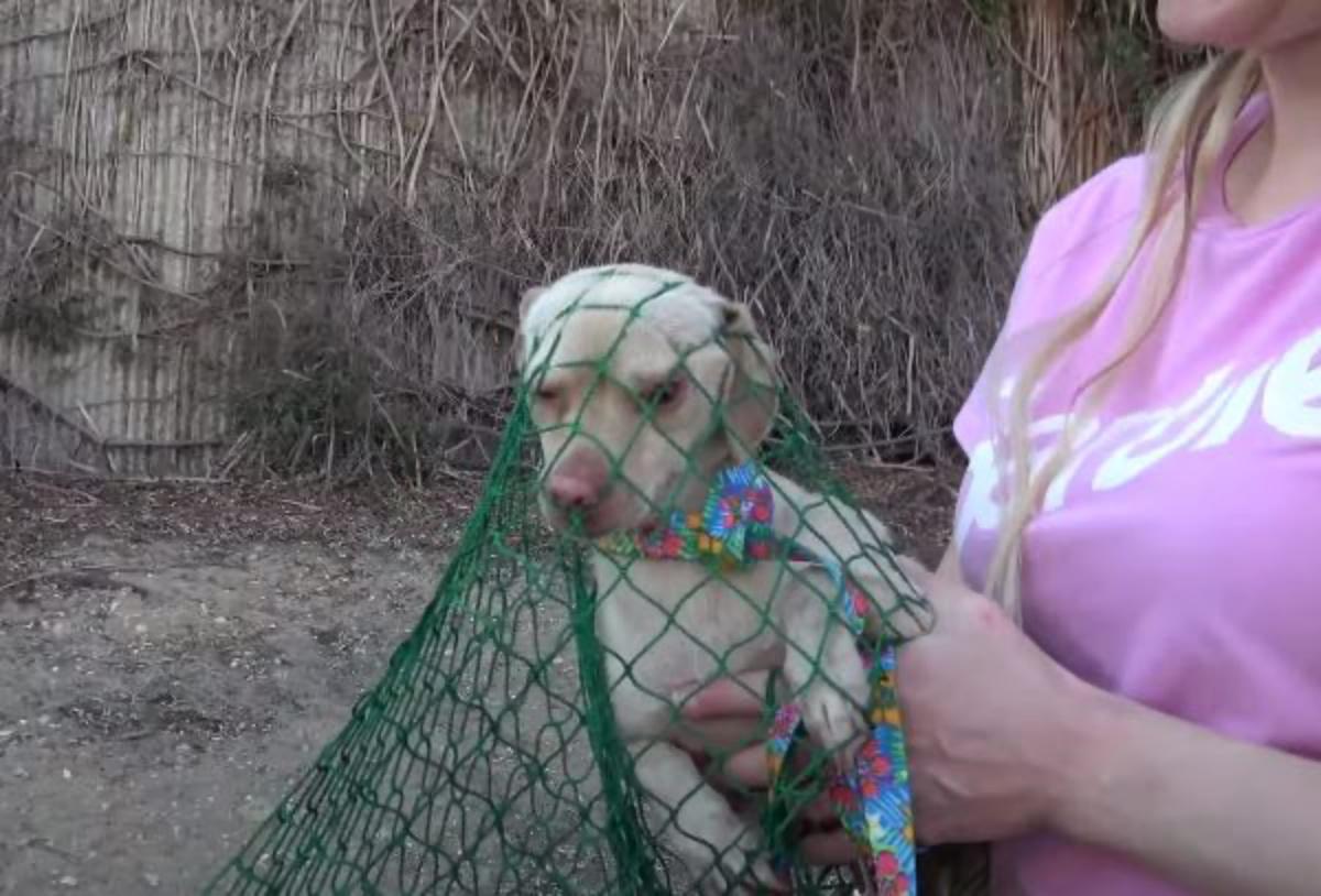 il salvataggio di Barbie