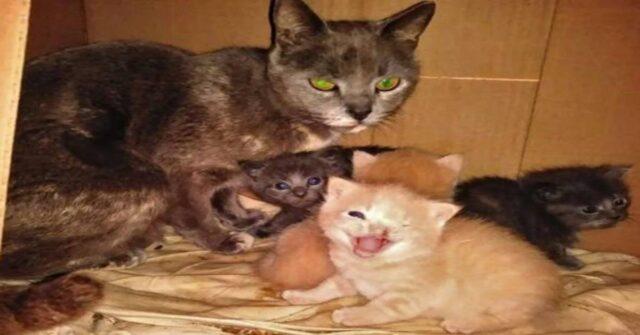 il salvataggio di Kurdoroy e della sua famiglia